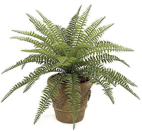 Autograph Foliages A-130 23 in. Small Boston Fern, Green