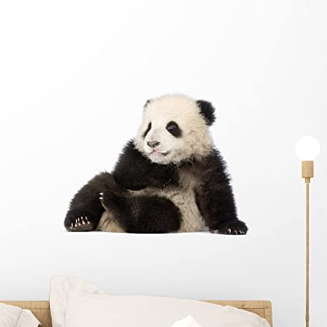 Amazon.com: 6 meses de Panda gigante calcomanía decorativo ...