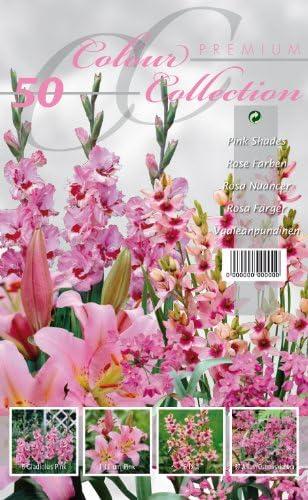 Greenbrokers Lot de 50 bulbes de Fleurs d/ét/é Rose