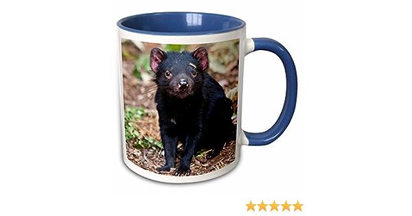 Amazon Com 3drose Tasmanian Devil Wildlife Tasmania Australia Mug 11 Oz Blue Kitchen Dining