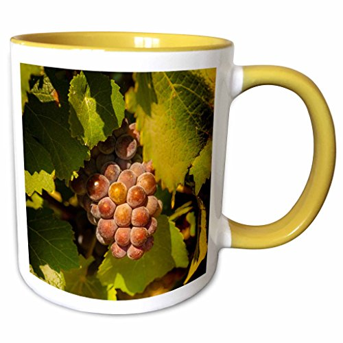 (3dRose Danita Delimont - Richard Duval - Grapes - USA, Washington, Yakima Valley. Pinot Gris grapes ripen. - 15oz Two-Tone Yellow Mug (mug_191774_13))