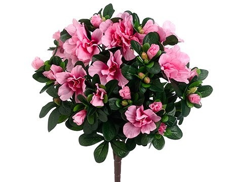 14-Azalea-Bush-x5-Pink-pack-of-12