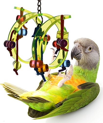 Acrylic Activity Play Tunnel Small Bird Toy with Jingle Bell by Avianweb by Avianweb