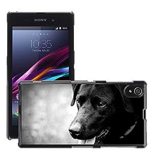 Etui Housse Coque de Protection Cover Rigide pour // M00116695 Perro Labrador Negro canina mascotas // Sony Xperia Z1 L39 C6903 C6906 C6943 C6902