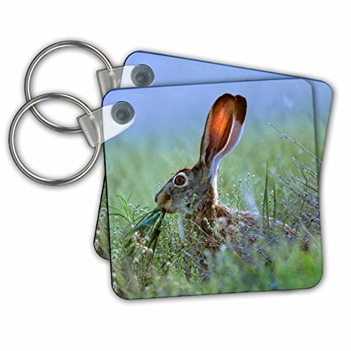 Danita Delimont - Rabbits - Black-tailed Jackrabbit, Lepus californicus, eating grass, New Mexico - Key Chains - set of 2 Key Chains (kc_259776_1) (Jack Keychain Rabbit)