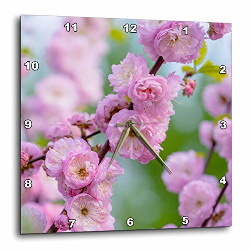 3dRose Alexis Photography - Flowers Prunus Triloba - Prunus triloba blossoms - also known as flowering plum - 15x15 Wall Clock (dpp_272970_3)