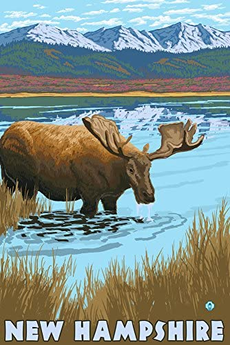 New Hampshire – Moose Drinking In Lake 36 x 54 Giclee Print LANT-19492-36x54