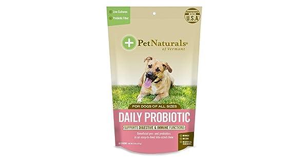 Amazon.com: Daily Probiotico Masticar para perro, 60: Mascotas