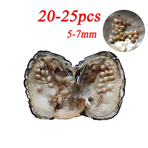 (Cultured Pearls in Oysters,Cultured Freshwater Pearl Oysters with Pearls Inside Big Oyster Pearls in Oyster Anniversary Decoration for Women(5-7mm)(1 PC))