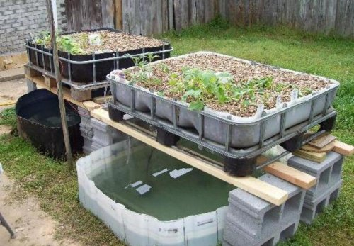 How to Build a Home Grown Aquaponics System Cheap by [Lamb, Tony]