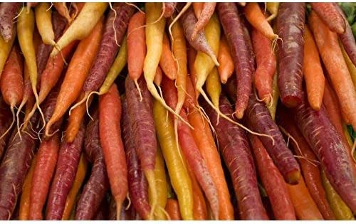 Variedad multicolor de zanahoria - CINTA DE SEMILLA - 7 m de cinta ...
