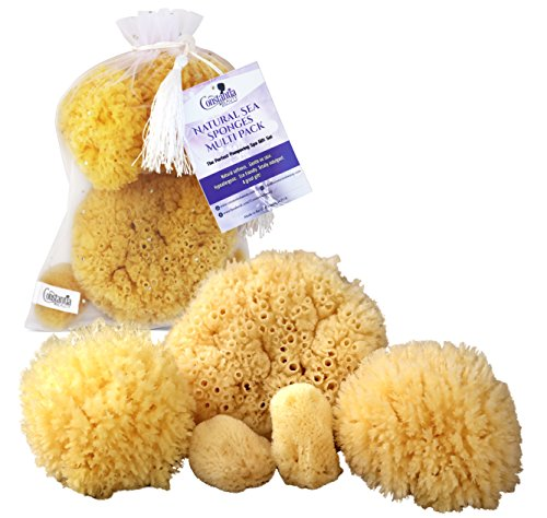 Natural Sea Sponges - Natural Sea Sponges the Perfect Spa Gift Set by Constantia Beauty (5 pack)