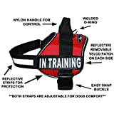 """In Training Harness Red Neoprene with """"IN TRAINING"""" patches (Girth 19-25"""", Bright Red)"""