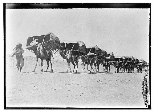 HistoricalFindings Photo: Camel Caravan of Pilgrims to Mecca,Saudi Arabia,c1910,American Colony Photo