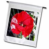 Best 3dRose Garden Gifts - 3dRose fl 52675 1 Scarlet Poppy Poppies, Remembrance Review