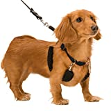 Dog Halter - Non-Pull No-Choke Humane Pet