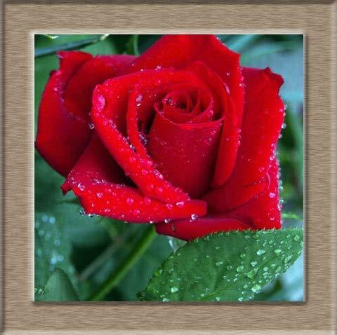 Green Seeds Co. 50 / Paquete, Raro Increíblemente bella Flor de ...