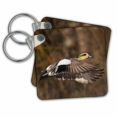 Danita Delimont - Ducks - American Wigeon Taking Flight - Key Chains - set of 2 Key Chains (kc_278081_1) - Wigeon Set