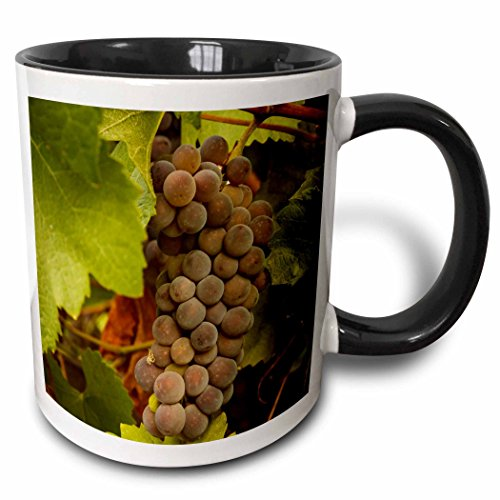 (3dRose Danita Delimont - Vineyards - USA, Oregon, Keizer, Pinot Gris grape vineyard - US38 RBR0733 - Rick A Brown - 15oz Two-Tone Black Mug (mug_146218_9))