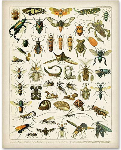 (Insects - 11x14 Unframed Art Print - Great Home Decor)