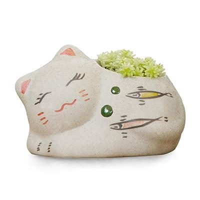 Cute Cat Ceramic Succulent Cactus Flower Pot/Planter/Container/Plant Pots for Home Garden Office Desktop Decoration (Fish) : Garden & Outdoor