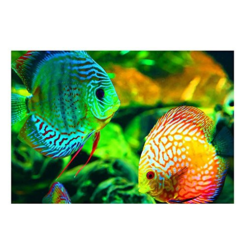 5D Diy Diamond Painting,Awakingdemi Tropical Fish Diamonds Embroidery Square drill Painting Cross Stitch Rhinestone Needlework Home Decor Tropical Fish Embroidery