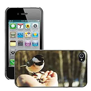 Hot Style Cell Phone PC Hard Case Cover // M00047475 photography small animals wild bird // Apple iPhone 4 4S