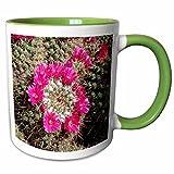 3dRose Danita Delimont - Cactus - Mammillaria standleyi, Stanleys Pincushion Cactus - 11oz Two-Tone Green Mug (mug_229765_7)