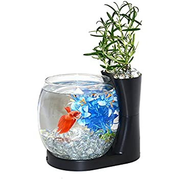 small screenshot 1 office fish. elive betta fish bowl tank with planter small 075 gallon aquarium screenshot 1 office