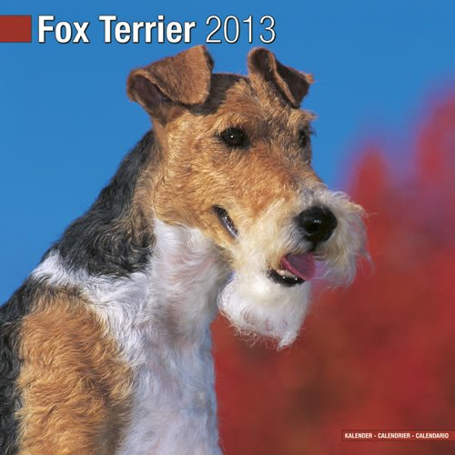 Fox Terrier 2013 Wall Calendar ()