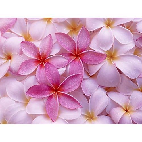 Hawaiian Pink Plumeria Plant Cutting ~ Grow Hawaii for sale