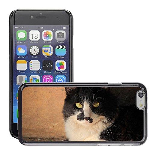 """Bild Hart Handy Schwarz Schutz Case Cover Schale Etui // M00133308 Cat Feline Schwarzweiß Natur // Apple iPhone 6 PLUS 5.5"""""""