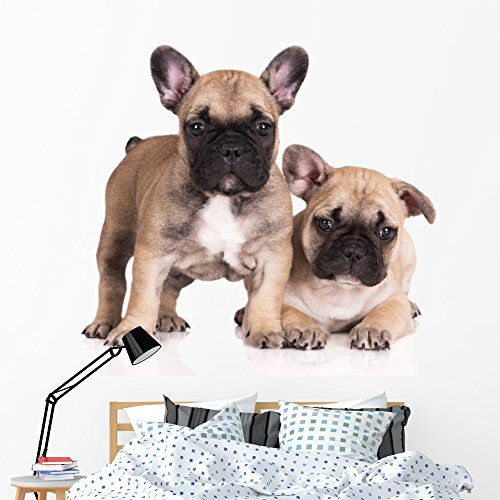 French Bulldog Puppies Wall Decal by Wallmonkeys Peel and Stick Animal Graphics (60 in W x 40 in H) WM371878