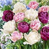 Double Late Mix Tulip 15 Bulbs - 12/+ cm Bulbs