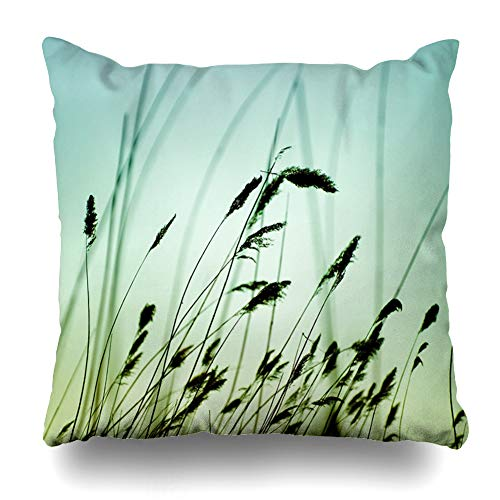 Ahawoso Throw Pillow Cover Square 20x20 Freshly Macro Variegated Structures Flowering Grass Freshness Nature Wind Reed Meadow Light Design Bending Pillowcase Home Decor Cushion Case ()