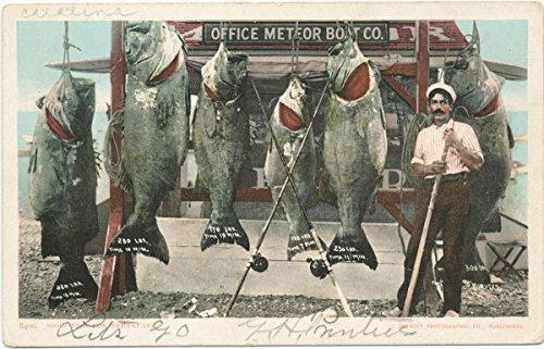 Historic Pictoric Postcard Print | World's Record Catch of Sea Bass, Santa Catalina, Calif, 1898 | Vintage Fine Art