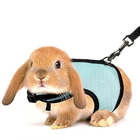 Wuxi Chuannan - Arnés para Mascota, Conejos, Hámster, Correa de ...