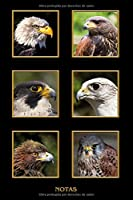 Notas: Águila Halcón Ratonero. Formato A5 120