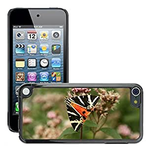 Hot Style Cell Phone PC Hard Case Cover // M00117444 Butterfly Flower Summer Insect Macro // Apple ipod Touch 5 5G 5th