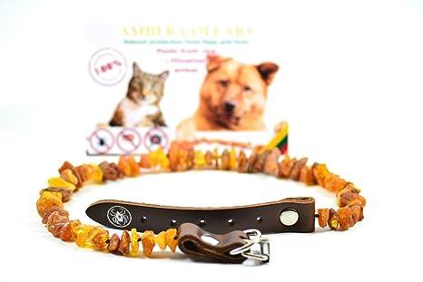Collar de ámbar para perros y gatos con la hebilla de cuero ámbar báltico sin procesar