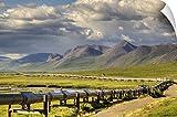 Lucas Payne Wall Peel Wall Art Print entitled Semi truck driving the Haul Road along the Trans Alaska Oil Pipeline, Arctic Alaska