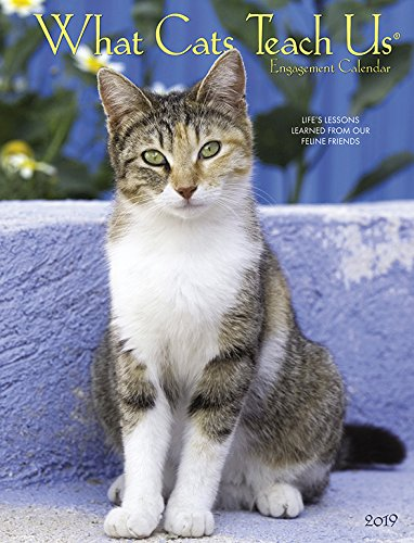 What Cats Teach Us 2019 Engagement Calendar