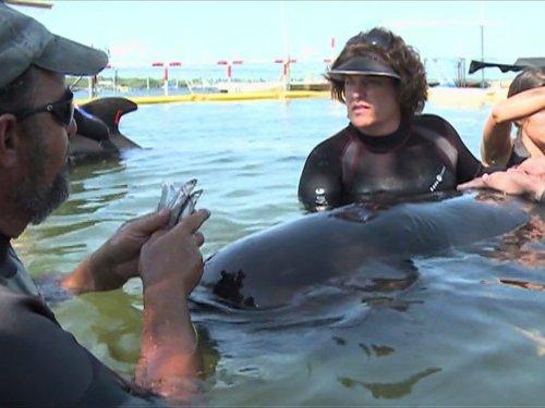 Sea Rescue - Stranded