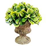 Evoio Artificial Plant Potted Mini Fake Plant Decorative Lifelike Flower Tabletop Plants Bonsai for Office Home Desks and Tables Decorations (Green Good Luck Tree) (802)