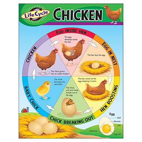 Life Cycle Of Chicken (TREND enterprises, Inc. Life Cycle of a Chicken Learning Chart, 17