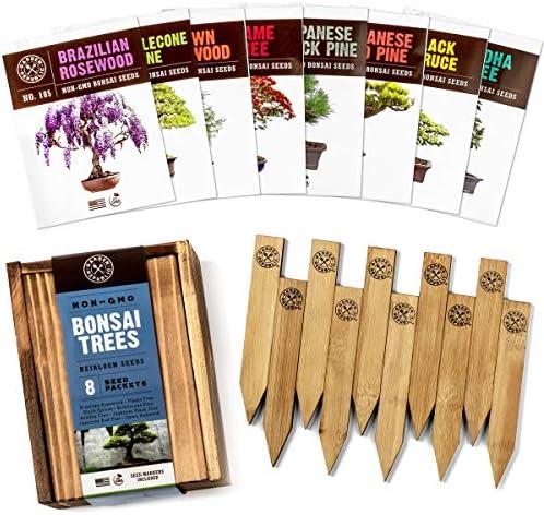 Bonsai Tree Seeds Kit Varieties product image