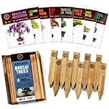 small indoor garden ideas Bonsai Tree Seeds Kit - 8 Popular Varieties of Non GMO Mini Bonsai Trees + Bamboo Plant Markers, Wood Gift Box, Grow Bonzai eBook - Bonzie Tree Seed Starter Kits, Indoor Garden, Gardening Gifts Idea