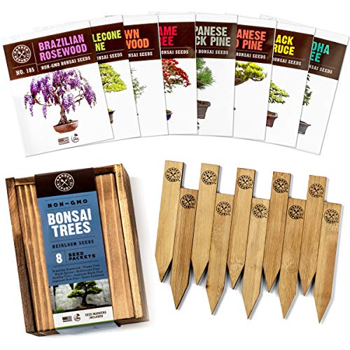 Bonsai Tree Seeds Kit - 8 Popular Varieties of Non GMO Mini Bonsai Trees + Bamboo Plant Markers, Wood Gift Box, Grow Bonzai eBook - Bonzie Tree Seed Starter Kits, Indoor Garden, Gardening Gifts Idea (Outdoor Tree Seeds Bonsai)