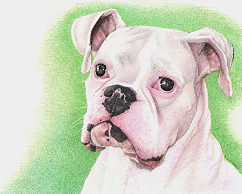 boxer-white-dog-8x10-art-print-by-wendy-hogue-berry