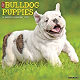 Just Bulldog Puppies 2019 Wall Calendar (Dog Breed Calendar)